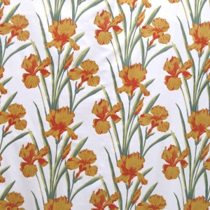 Flag Iris Col Honey Gold