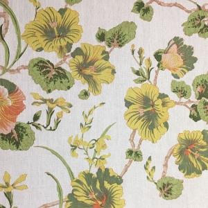 Hibiscus - Primrose Yellow